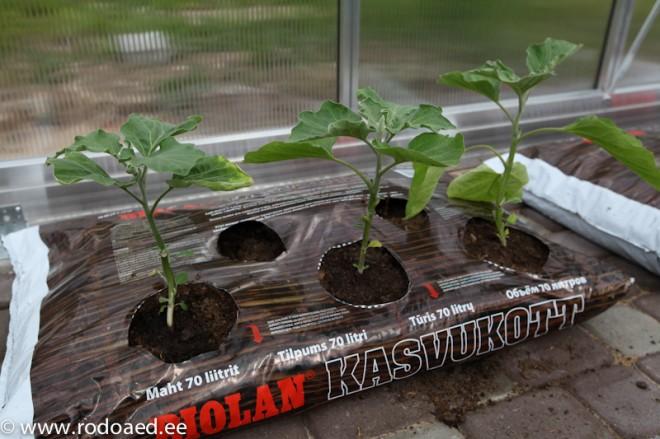 tomatid kasvukotis