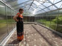kasvuhoones kasvatamine