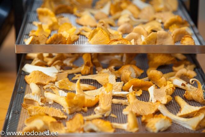 seente kuivatamine-2