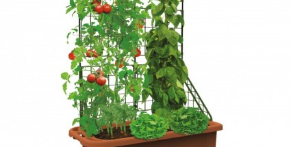 grow box_2