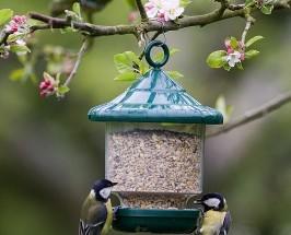 Soogimaja-lindudele