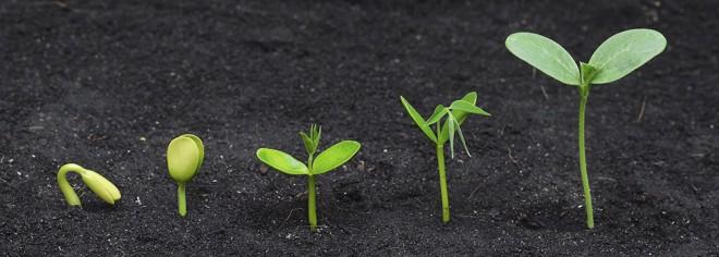 taimede ettekasvatamine_1